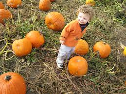 Pumpkin Picking Maine by Guide To Pumpkin Picking In Maine I Love Halloween