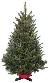 Balsam Christmas Tree Care by Cedar Grove Christmas Trees