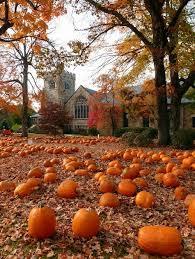 Hartsburg Pumpkin Festival 2015 Dates by Best 25 Pumpkin Field Ideas On Pinterest Fall Season Pumpkin