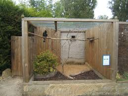 How To Build An Indoor Bird Aviary | Dogs | Pinterest | Bird ... Gallery Interior Design Center Cages Aviaries The White Finch Aviary Small Spaces Bathroom Organizing And Decor Artful Attempt Twin Farms Bnard Vermont Luxury Resort Cockatiels In Outdoor Youtube Just Property House For Sale Hill Plants Pinterest Majestic Custom Hickory Nursing Home Zoo Berlins New Bird House Dinosaurpalaeo Bird Big Screen Tv Cabinets On Idolza How To Build Indoor Finch Aviary Yahoo Image Search Results