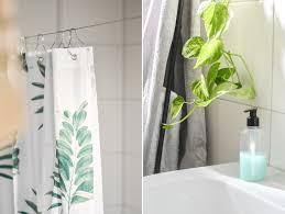 ruhrwohl de die besten pflanzen fürs badezimmer worauf
