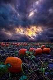 Pumpkin Farms Near South Milwaukee by 491 Best Halloween Images On Pinterest Happy Halloween