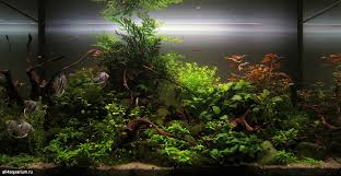 2015 kadr aquascape xl 15 1 000—517 pixels