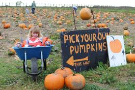 Hillcrest Farms Pumpkin Patch by Pumpkin Patch Party At Pickwell Farm Dear Mummy Blog