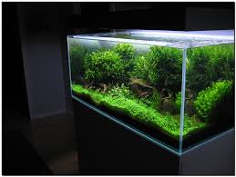 Aquascape Of The Month August 2009: