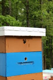 Top Entrance Bee Hives Keeping Backyard Bees All Products Backyardhive Bee Hives And Bkeeeping Supplies For Sale 10 Frame Langstroth Flow Hive Design Easy To Follow Diy Plans Jon Peters Art Home Top Entrance Keeping Backyard Bees Epic Top Bar Beehive Swarm Trap Youtube Horizontal Topbar Hive Wikipedia Bar Tjs Mad Honey Harvesting Method Mistress Beek How Build A Simple Bkeeping Beehive Tips Part 1 With Bars Built