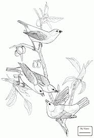 Coloring Pages Birds Painted Bunting