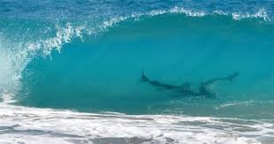 Is Bathtub Beach In Stuart Fl Open by Mullet Migration Brings Sharks To Treasure Coast Beaches Photo