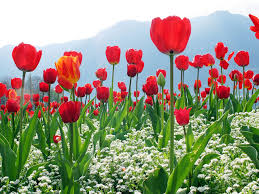 Latest Flowers Wallpapers Nature Desktop Beautiful Cell Phone