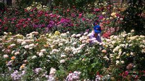 A Guide to Public Gardens in Phoenix Tempe Glendale Mesa
