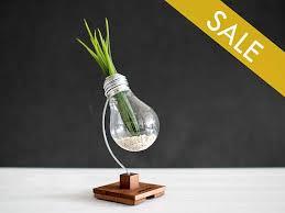 desk decor terrarium plant personalized gift wooden plant