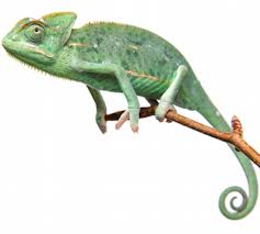 100 Chameleon Floor Registers Insurance ExoticDirect