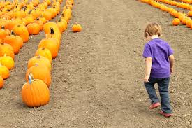 Faulkner Pumpkin Patch by Pumpkin Patches In Ventura County Baby Baby Lemon