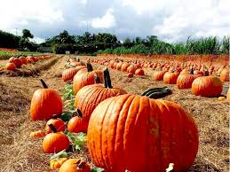 Sarasota Pumpkin Festival Location by Top 10 Pumpkin Patches To Visit This Fall In Florida
