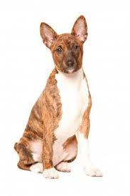 Low Shed Dog Breeds by Small Non Shedding Dogs Small Dog Place