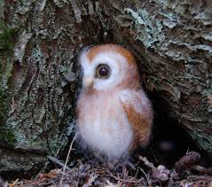Needle Felted Owlet Baby Owl Felted Needle Felted Owl Baby Chris Eastern Screech Owl Nest Box Cam For 2001 Three Cute Barn Owlets Getting Raised In Kodbakkam Chennai 077bojpg Needle Felted Owlet Baby Outdoor Alabama Escapes And Photography Owls Owlets At Charlecote Park Robin Loznak Barn Owls Oregon Overheated Chicks Rescued Hungry Project 132567 2568 2569 2570 The Wildlife Center Wallpaper Archives Trust Young Thrive On Harewood Estate House By Michael A Eccles