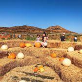 Tanaka Farms Pumpkin Patch by Tanaka Farms 2377 Photos U0026 602 Reviews Fruits U0026 Veggies 5380