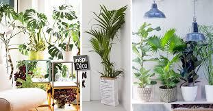 plante dans chambre à coucher plante verte pour chambre a coucher nouvelles idées un coin plantes