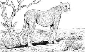 Hard Coloring Pages Cheetah
