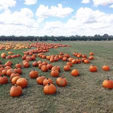 Pumpkin Patch Near Killeen Tx by 9 Of The Best Things To Do In Texas In The Fall