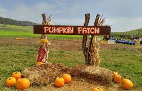 Pumpkin Picking Pa by Harvesting Happiness At Kohala Mountain Farm Big Island Now