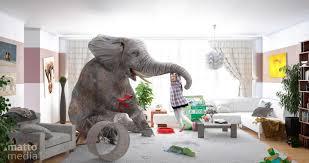elefant im wohnzimmer