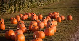 Best Pumpkin Patch Indianapolis by Fall Harvest Festival In Greenwood At Waterman U0027s Family Farm