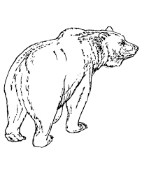 Grizzly Bear Coloring Page 19 Free Printable Pages For Kids