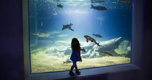 OdySea Aquarium In Scottsdale: 8 Tips, Things To Know Before ... Free Novolog Flexpen Coupon Spell Beauty Discount Code Seaquest Aquarium Escape Room Olive Branch One A Day Menopause Inn Shop Squaw Valley Promo Coach Bags Uk Odysea Aquarium Local Coupons October 2019 Digital Coupons Dillons Acurite Codes Jeans Wordans Ourbus March Dcg Stores Fniture