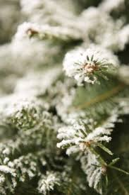 Snow Flocking For Christmas Trees by How To Make Homemade Christmas Tree Flocking Homemade Christmas