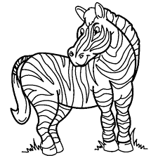 Perfect Zebra Coloring Page 12 On Pages For Adults With