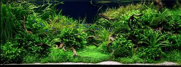 Aqua Rebell And Aquascaping - Aqua Rebell Aquascape Pond Pump Problems Tag Aquascape Pond Products Pumps Red Rock Journal By James Findley The Green Machine Cuisine Live Designs Set Up Idea Fish Aquascapes Water Garden Installation Setup Articles With Freshwater Aquarium Community Tank Post Your Favorite Natural Ipirations And Adventures In Aquascaping Tanks Books Lets Start With A Ada Learn All The Basics Of Niwa Pisces Amazing Amazon Beautify Home Unique
