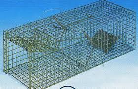 live cat trap live catch cat cage trap traps or stray cats