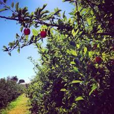 Apple Pumpkin Picking Syracuse Ny by Abbott Farms 15 Photos U0026 12 Reviews Fruits U0026 Veggies 3275