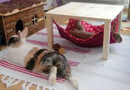 kaninchengehege in der wohnung hängematten sind sehr