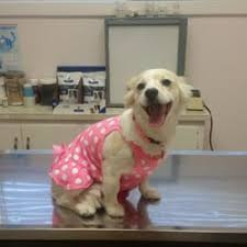 redlands animal hospital 44 reviews veterinarians 1093 w