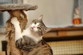 Wood Lamp Examination Diagnosis by In Cats Symptoms Causes Diagnosis Treatment Recovery