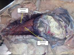 cat digestive system cat digestive system ee and tw