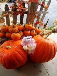 Local Pumpkin Patches Dayton Ohio by Violet U0027s Silver Lining Betty The Bunny Goes Apple Picking