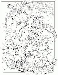 Leatherback Sea Turtle Coloring Page