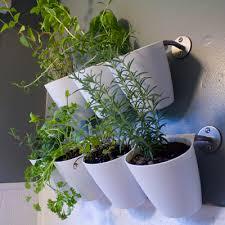 hanging kitchen herb garden ikea hack via flightsofdelight com