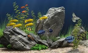 aquarium d eau douce aquarium d eau douce