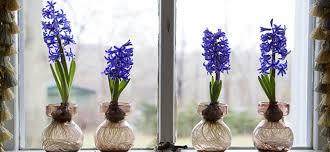 how to bulbs indoors groomed home