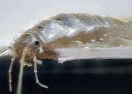 weiße lebewesen im badezimmer insekten im badezimmer die