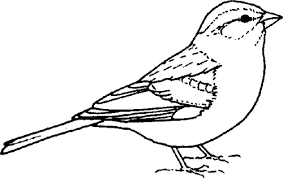 Sparrow clipart Pencil and in color sparrow clipart