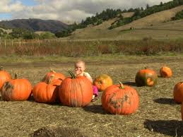 Pumpkin Patch Santa Rosa by Halloween 101 Best Local Pumpkin Patches San Rafael Ca Patch