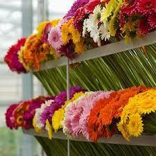 8 best send gerbera flowers online images on pinterest daisy