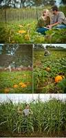 Heather Hill Pumpkin Patch by 49 Best Pumpkin Patch Engagement Photo Ideas Images On Pinterest