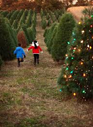 Plantable Christmas Tree Ohio by Christmas Trees U2014 Eckert U0027s Family Farms And Seasonal Pick Your Own