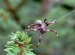 Remains Of The Day Spiders by Chapter Ix The Garden Spiders Building The Web Jean Henri Fabre